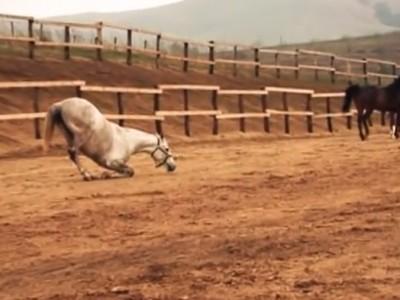 Herghelia privata de cai din rasa pur sange arab Bacau